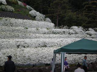 2009-05-18.jpg